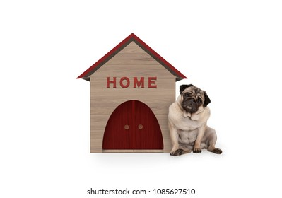 cheeky pug puppy dog sitting down next to dog house with sign Home, isolated on white background