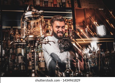 Cheerful bar owner have nice time with his pet small bulldog. Bottles and glasses at background.