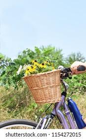 cheerful basket of flowers on bicycle handlebars in summer