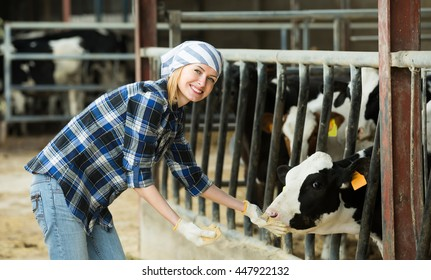 Cheerful cowgirl taking care of cows in livestock barn