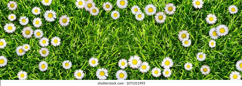 cheerful daisy meadow