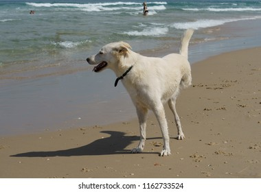 Cheerful disability dog on three legs playing on Beach in Charles Clore Park. Tel Aviv, Israel