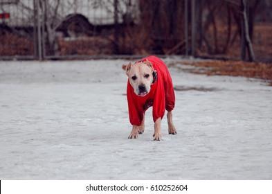 cheerful dog on walk