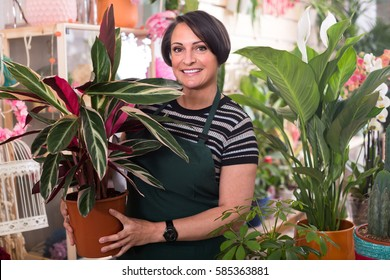 Cheerful female florist holding a pot with a home plant in the floral shop