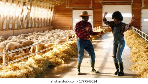 Cheerful funny young couple of African American male and female farmers dancing in shed with flock of sheep. Joyful man and woman, shepherds having fun and doing dance moves in stable. Happy workers.