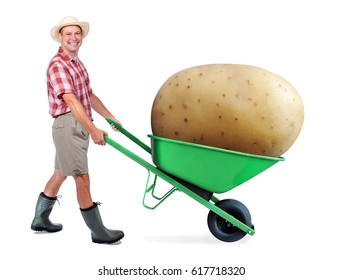 Cheerful gardener carrying a large potato. A man pushing a wheelbarrow with big potato. Successful vegetable grower farmer. Large harvest of genetically modified foods.