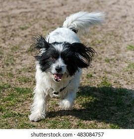 Cheerful little puppy playing