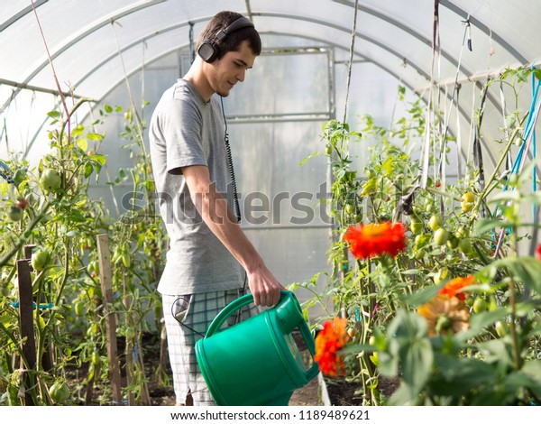 Cheerful man farmer listening to music and watering tomatoes in the greenhouse