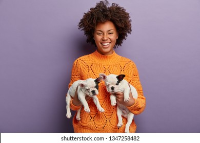 Cheerful mistress holds new born small puppies in both hands, wears orange jumper, finds new host for pets, being in good mood after stroll with two french bulldogs, isolated over purple wall