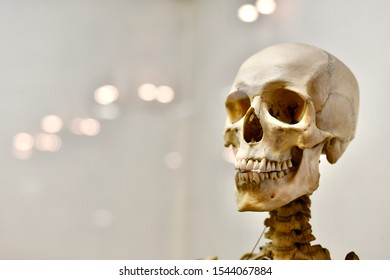 Cheerful portrait of a human skull with teeth. - Shutterstock ID 1544067884