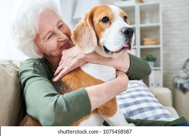 Cheerful retired senior woman with wrinkles smiling while embracing her Beagle dog and enjoying time with pet at home