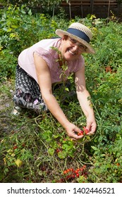 Cheerful senior woman with hat in cherry tomatoes garden.