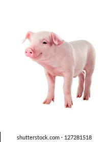 Cheerful smiling pig. Isolated on white background.
