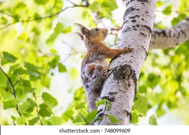 Cheerful squirrel climbing the tree
