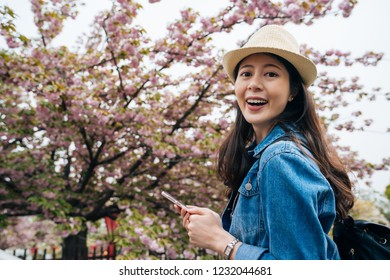 cheerful traveler looking at the online guide app on mobile phone visiting the beautiful cherry tree in japan mint. young girl with straw hat face camera smiling attractive. asian tourist self trip.