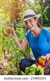 Cheerful woman gathering fresh tomatoes in her garden