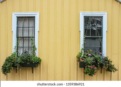 Cheerful yellow wood sided building closeup with window boxes full of flowers with strings strung up for vines to grow on
