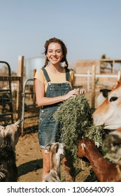 Cheerful young girl feeding goats and a cow