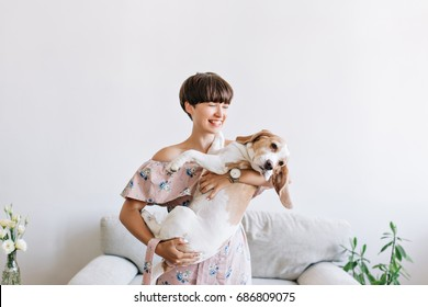 Cheerful young woman in trendy wristwatch holding her big puppy with black nose and laughing. Indoor portrait of smiling girl with dark short hair posing with beagle dog on gray background at home.