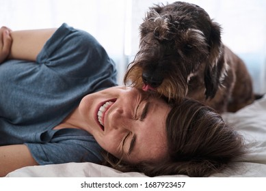 Cheering woman laughing with a dog teckel dachshund licking her face. Teckel licks a girl face