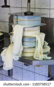 Cheese being pressed in mold before putting it into cellar to mature