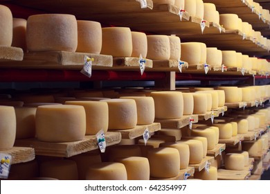 Cheese factory production shelves with aging cheese