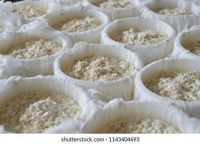 Cheese making process. Molds with semifinished for the production of cheese. Cheese ripening. Dairy industry. Selective focus
