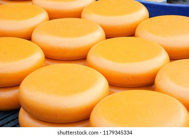 A lot of cheeses in the Alkmaar cheese market Netherlands.