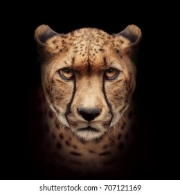 cheetah face isolated on black background