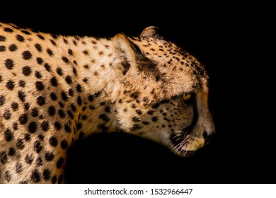 a cheetah resting in a green meadow