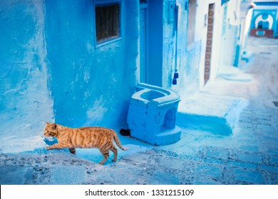 Chefchaouen - blue city of Morocco. Orange cat in the blue city. Detail on a blue doors and walls. Blue town street.