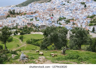 CHEFCHAOUEN, MOROCCO - CIRCA MAY 2018: A farmer and a herd of sheep on a hill overlooking the medina of Chefchaouen, Morocco. The town is famous for its buildings in shades of blue.