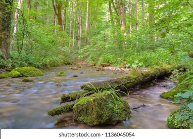 Cheile Nerei - Beusnita. Caras. Romania. Summer in wild Romanian river and forest. Long exposure.
