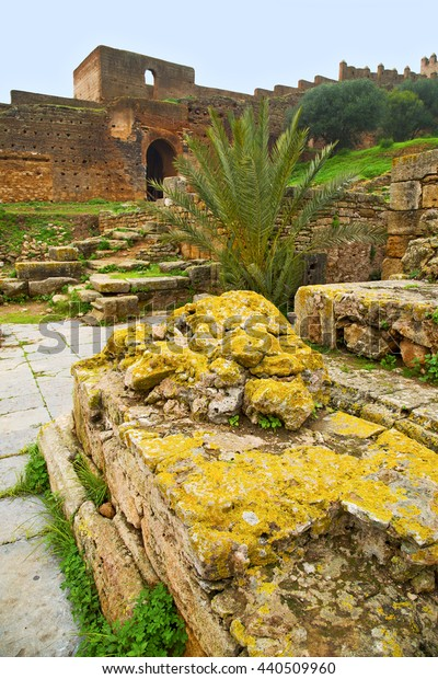 chellah  in morocco africa the old roman deteriorated monument and site