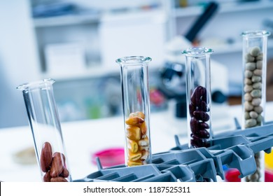 Chemical Laboratory of the Food supply . Food in laboratory, dna modify ..