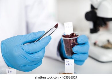 Chemical Laboratory of the Food supply . Food in laboratory, dna modify .Toning image