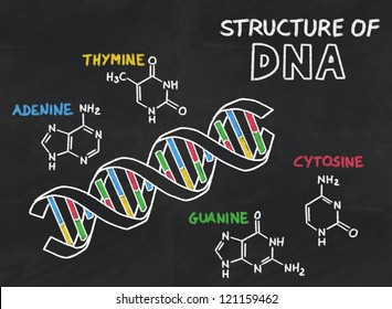 chemical structure of DNA on a blackboard