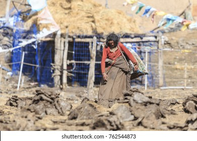 ChengDu, China - November 15, 2017: Woman in a remote part of SiChuan collecting Yak's dung. Yak's dung it's used to heat the houses on winter