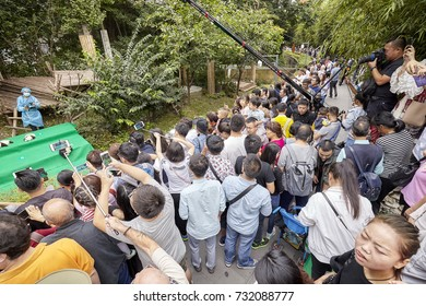 Chengdu, China - September 28, 2017: Journalists and visitors during eleven baby pandas first public display at Chengdu Research Base of Giant Panda Breeding. The bears were all born this year.