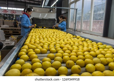 Chengdu, Sichuan / China - November 20 2017: a fruit production line in Sichuan. Sichuan is the largest agricultural provinces in China.