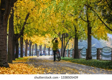 Chengdu, Sichuan / China - October 10 2018: people walking by the Jin Jiang river band in Chengdu downtown. Ginko leaves turned yellow in autumn.