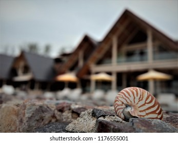 Cherating, Malaysia - July 18, 2018: A nautilus shell on the stone wall by the swimming pool at the clubhouse of The Kasturi resort at Chendor Beach.