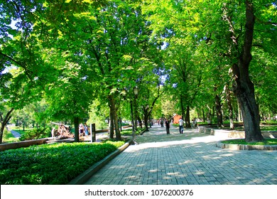 Chernihiv / Ukraine 28 August 2016: People having a rest in the city park with big trees. Summer holidays. Family vacation. Travel concept. 28 August 2016 Chernihiv / Ukraine