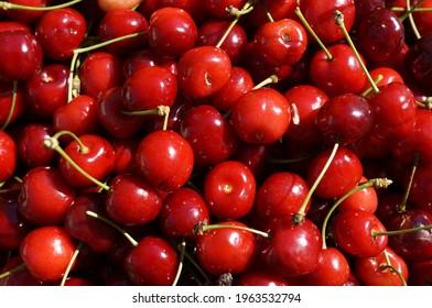 Cherries berries harvest, spring 2021