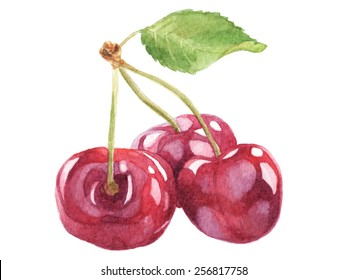 Cherries on a branch. Watercolor illustration.