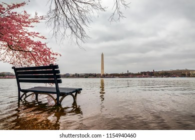 The Cherry Blossom in 2018 wasn't all springtime beauty in DC.  Many days were cloudy, windy, and the Tidal Basin flooded.