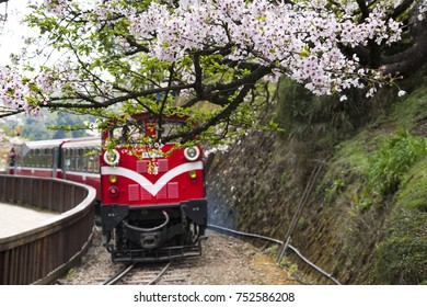 Cherry blossom with Ali Moutain Train