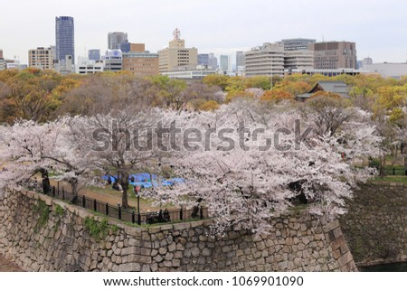 Cherry blossom around Nishinomaru Garden in Osaka castle