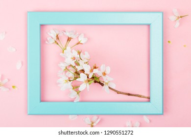 Cherry blossom branch inside an empty turquoise picture frame on a pink background. Flat lay