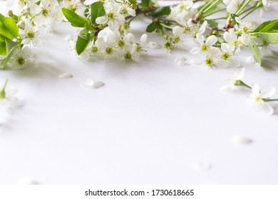 Cherry blossom branches on white wooden background